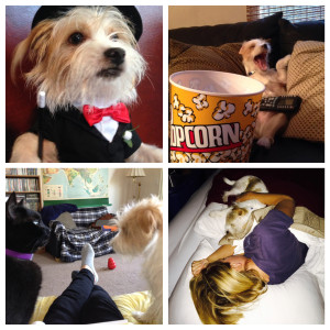 Collage of 4 funny dog photos